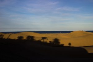 Dünen im Schatten der Palmen