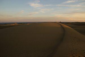 Sandfeld in den Dünen