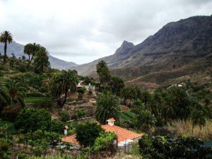 Das Tal der 1000 Palmen